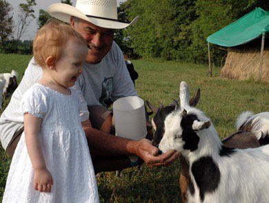 Nonno and the Goats