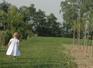 Walking by Field