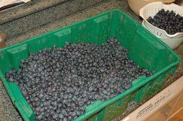 tt-blueberries-before.jpg