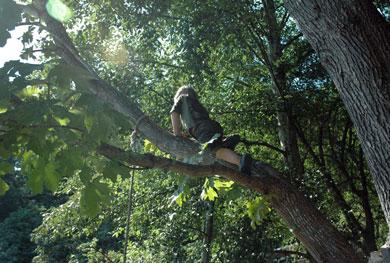 wwclimbing-tree-at-anvil.jpg