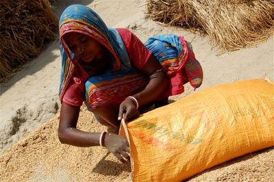 Indian woman stuffing corn sack