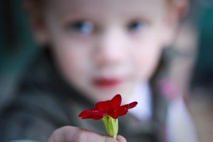 tt-olivia-red-flower