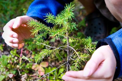 boys hands sapling forest