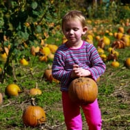 Don't Miss the Pumpkin Patch!
