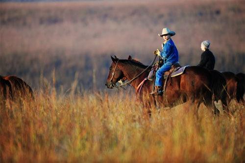 working-cattle-ree-drummond