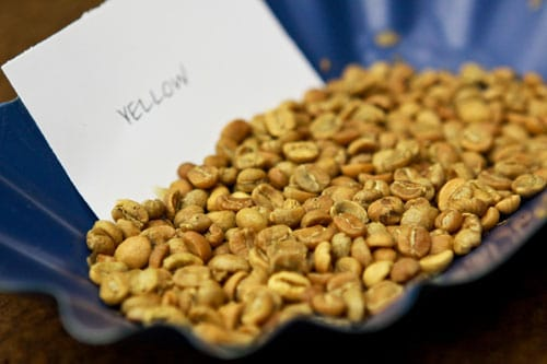 seattles-best-coffee-yellow-beans
