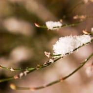 Wordless Wednesday — Spring Snow