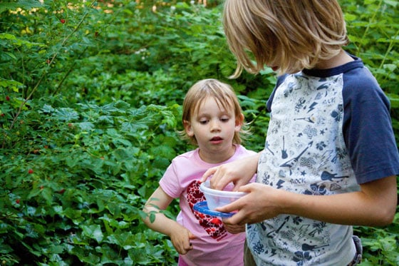 huckleberry-picking