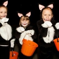 Our Halloween Photos – Three Black Cats and One Zombie