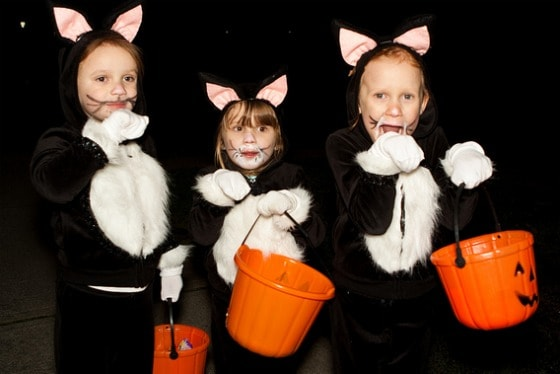 Three Black Cats - Olivia, Sophia and Juiia