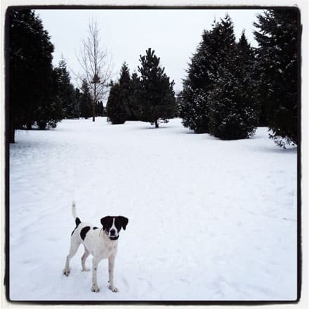 worldess-wednesday dog in snow
