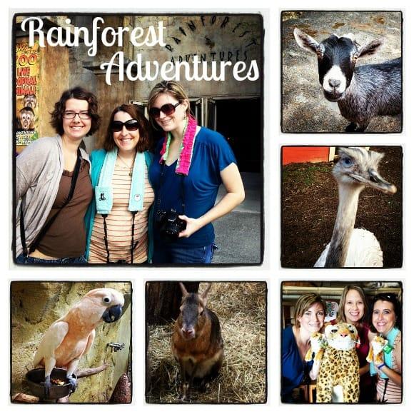 Rainforest Adventures TN