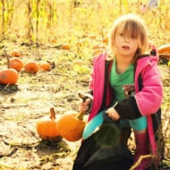 Wordless Wednesday — Pumpkin Patch