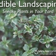Edible Landscaping Plants You Can Use to Grow Food Beautifully