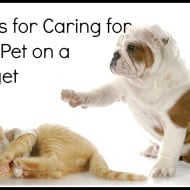Tackle it Tuesday- Tackling Pet Care