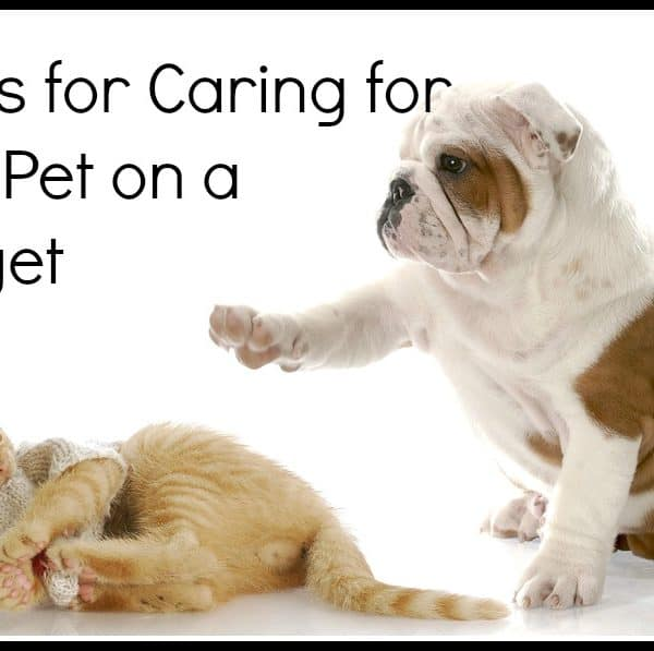 Tackling Pet Care