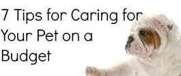 Thumbnail image for Tackle it Tuesday- Tackling Pet Care
