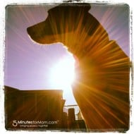 Wordless Wednesday – Yoga Watch Dog