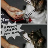 PicMonkey Tutorial — Master the Clone Tool and Make Stuff Disappear….