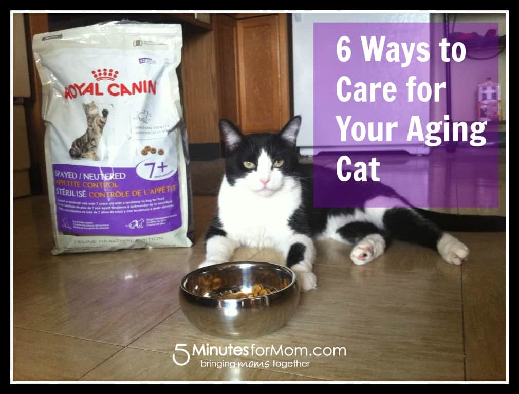 6 ways to care for your aging cat