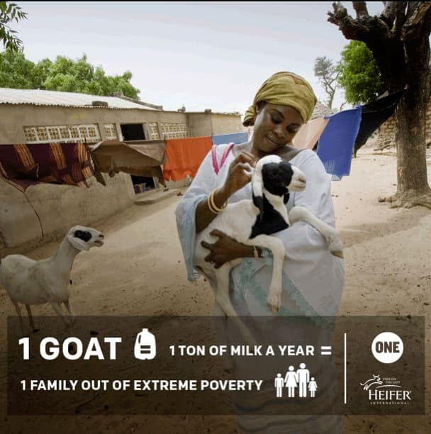 ONE Goat Campaign