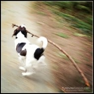 Wordless Wednesday — Have Stick, Will Run