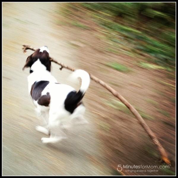 dog-with-stick