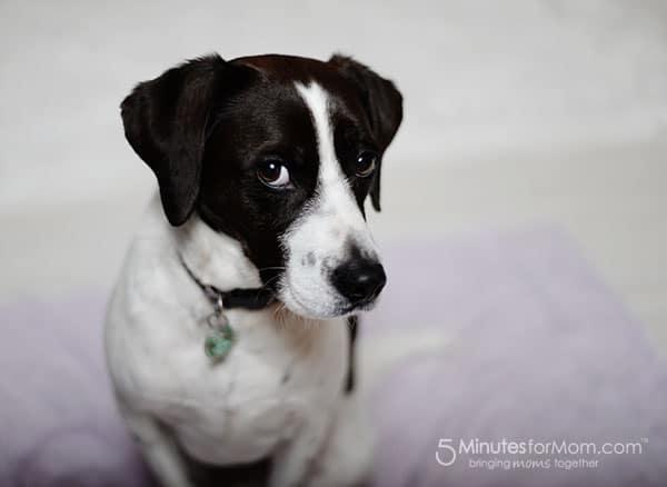 dog on white blanket
