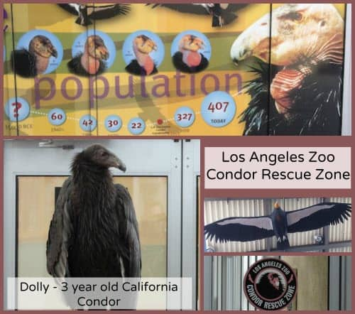 Condor Rescue Collage