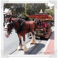 Wordless Wednesday – Ride Down Main Street #Disneyland #DisneySMMoms