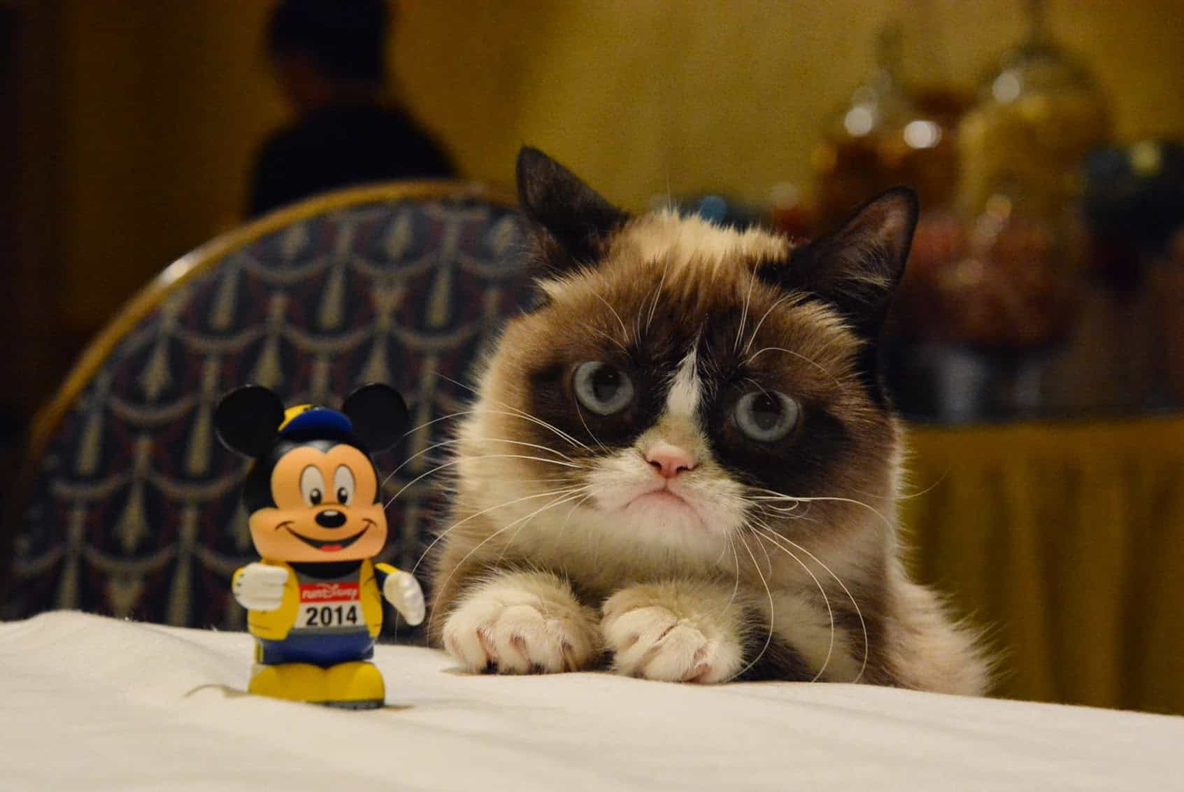 Grumpy Cat - by ESPN Game Day Photos