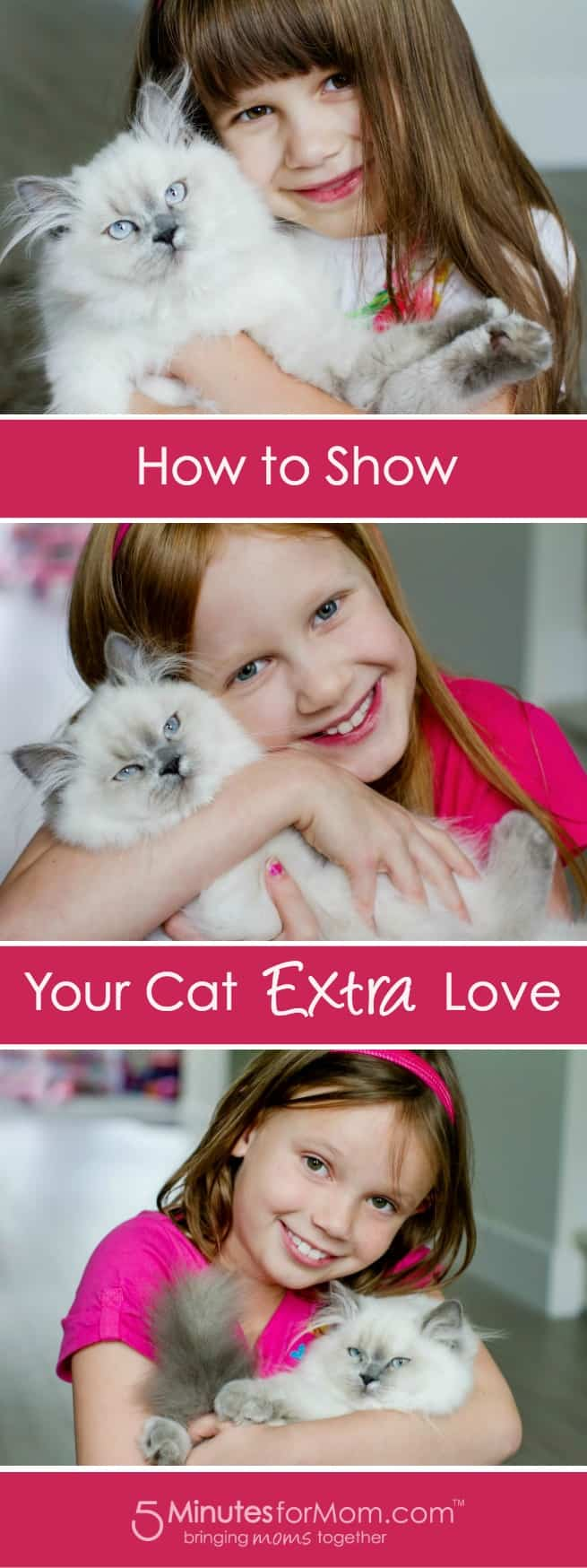 How to Show Your Cat Extra Love