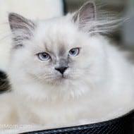 Wordless Wednesday – Mittens – A Very Beloved Kitten