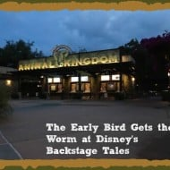 The Early Bird Gets the Worm at Disney's Animal Kingdom with the Backstage Tales Tour – #MonkeyKingdomEvent