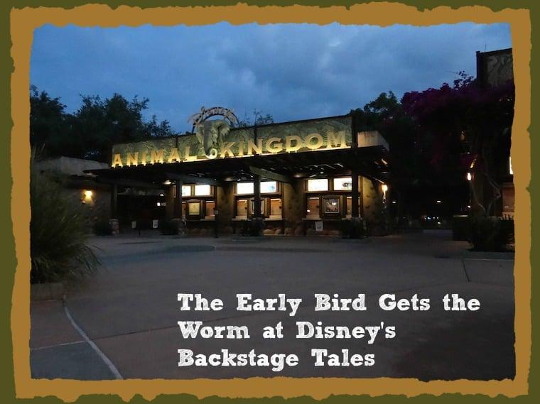 Disney's Animal Kingdom Morning