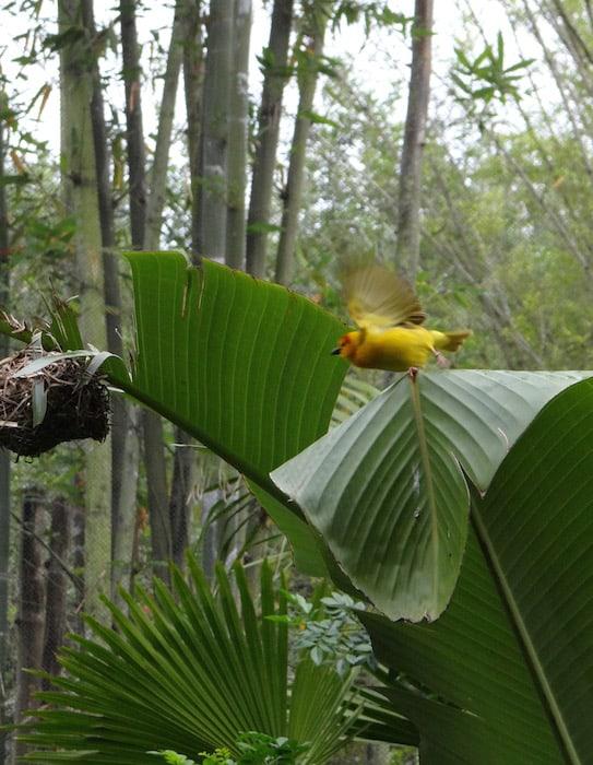 Disney's Animal Kingdom open aviary - Bird in flight