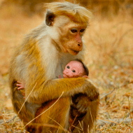 5 Reasons to see Disneynature's Monkey Kingdom – #MonkeyKingdomEvent #Giveaway