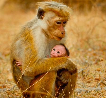 Maya and Kip - Disneynature - Monkey Kingdom