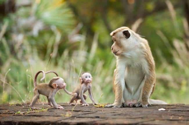 Monkey Kingdom - Baby Monkeys