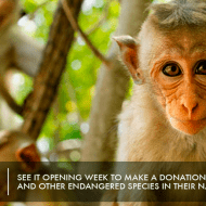 Interview with Disneynature Ambassador, Dr. M Sanjayan – #MonkeyKingdomEvent