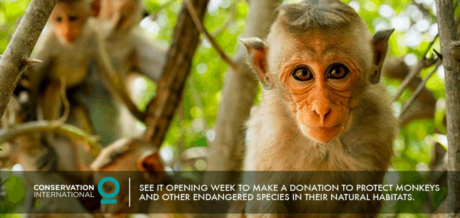 Monkey Kingdom - Conservation International