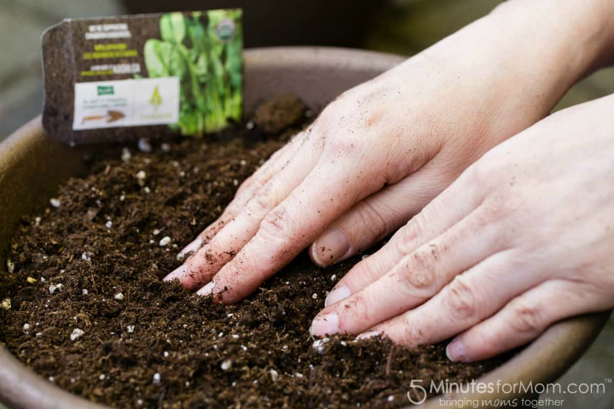 Planting Seeds In Pot