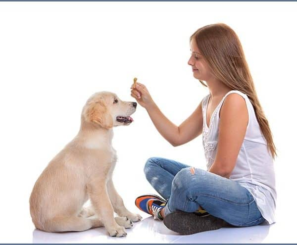 Kids Teaching Dogs Tricks: Is Your Dog or Your Child Learning More?