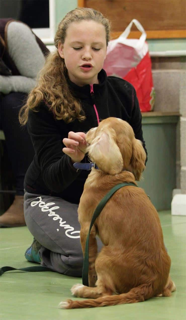 Kids Teaching Dogs Tricks Is Your Dog or Your Child Learning More?