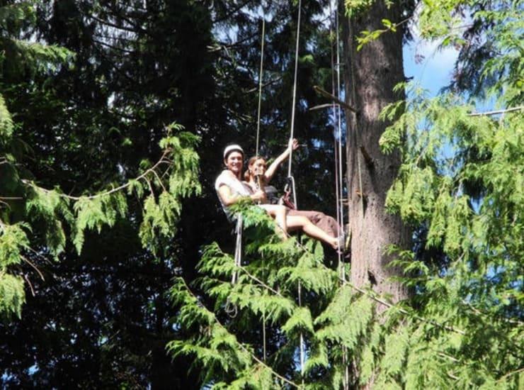Tree Climbing LivingSocial