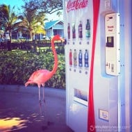 Wordless Wednesday – This Pink Flamingo Wants a Coke