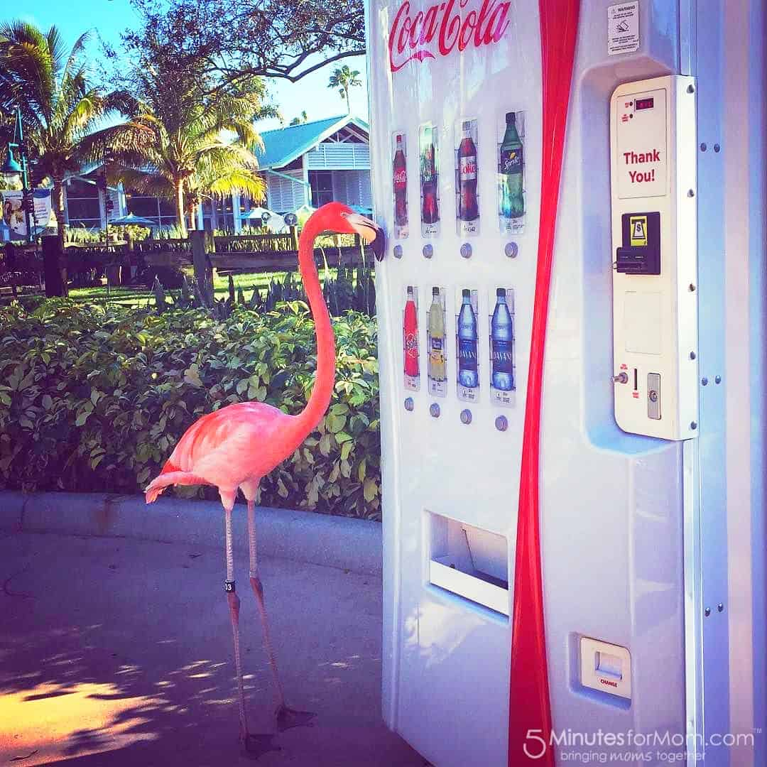 pink flamingo buying a coca-cola