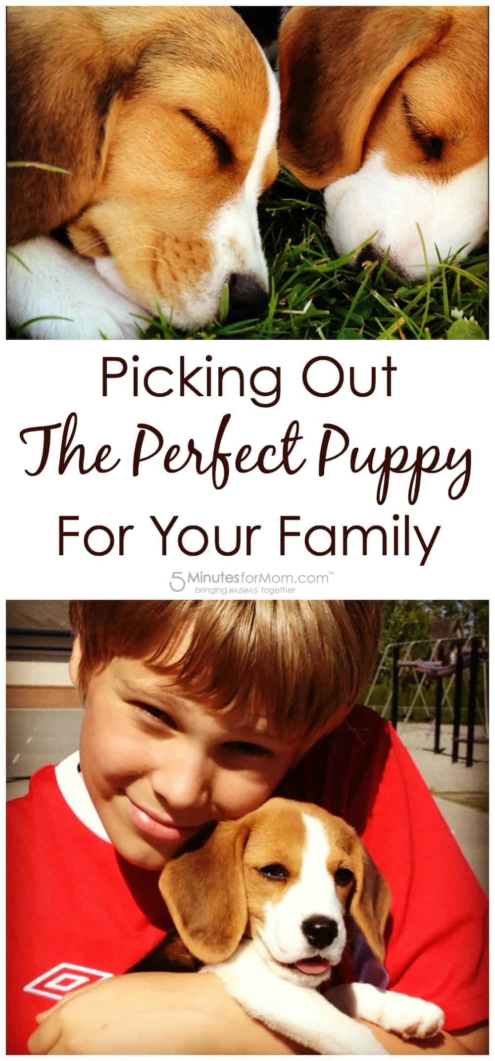 Picking out the perfect puppy for your family