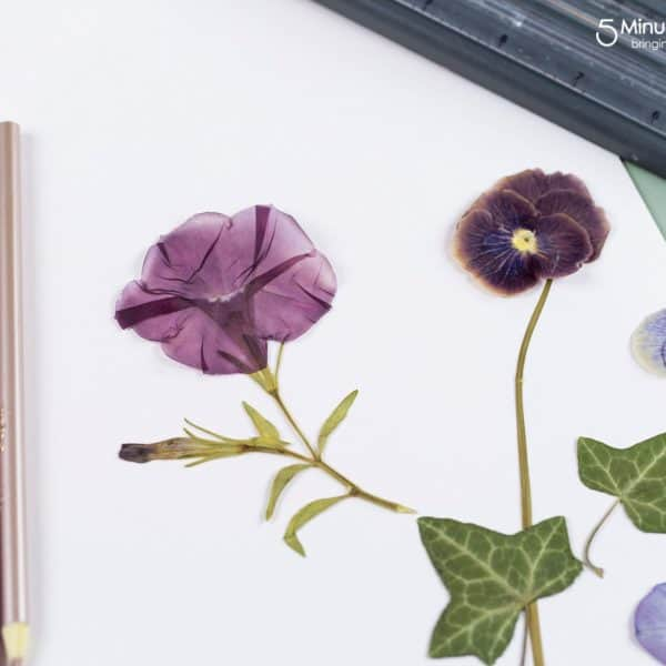 Pressed Flowers and Leaves – Craft Ideas for Kids