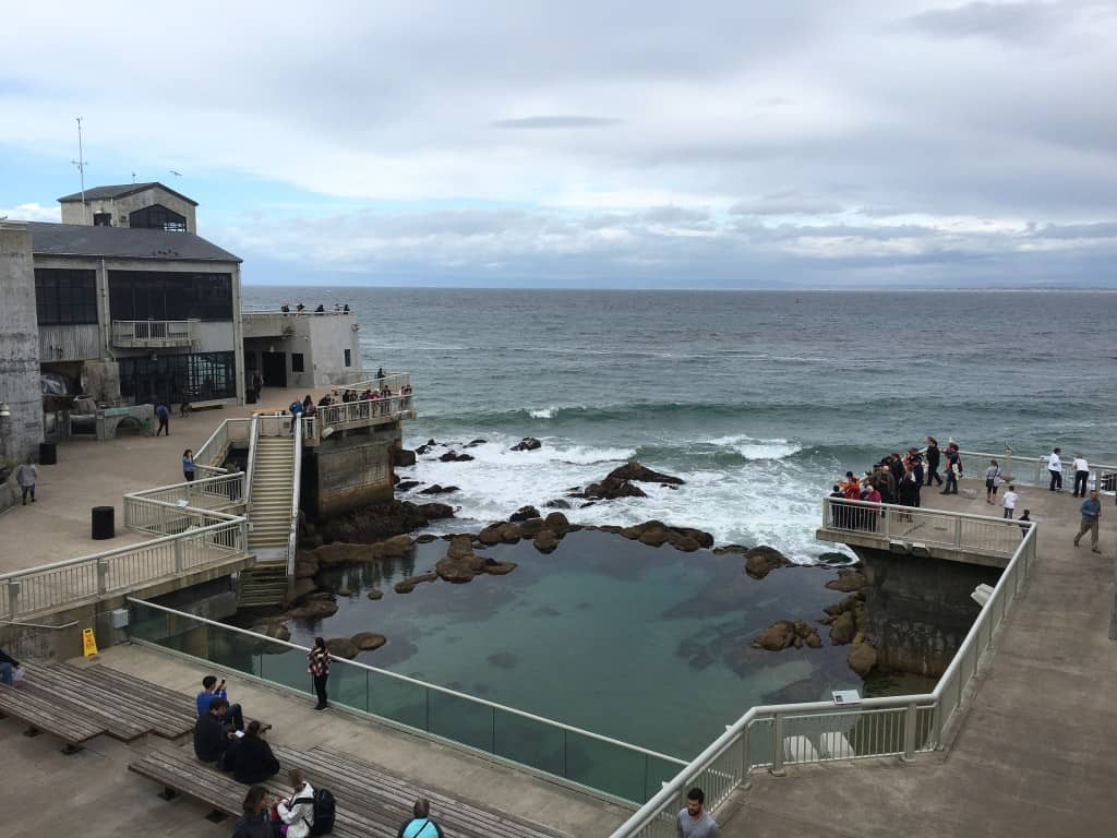 Monterey Bay Aquarium - Tide Pool